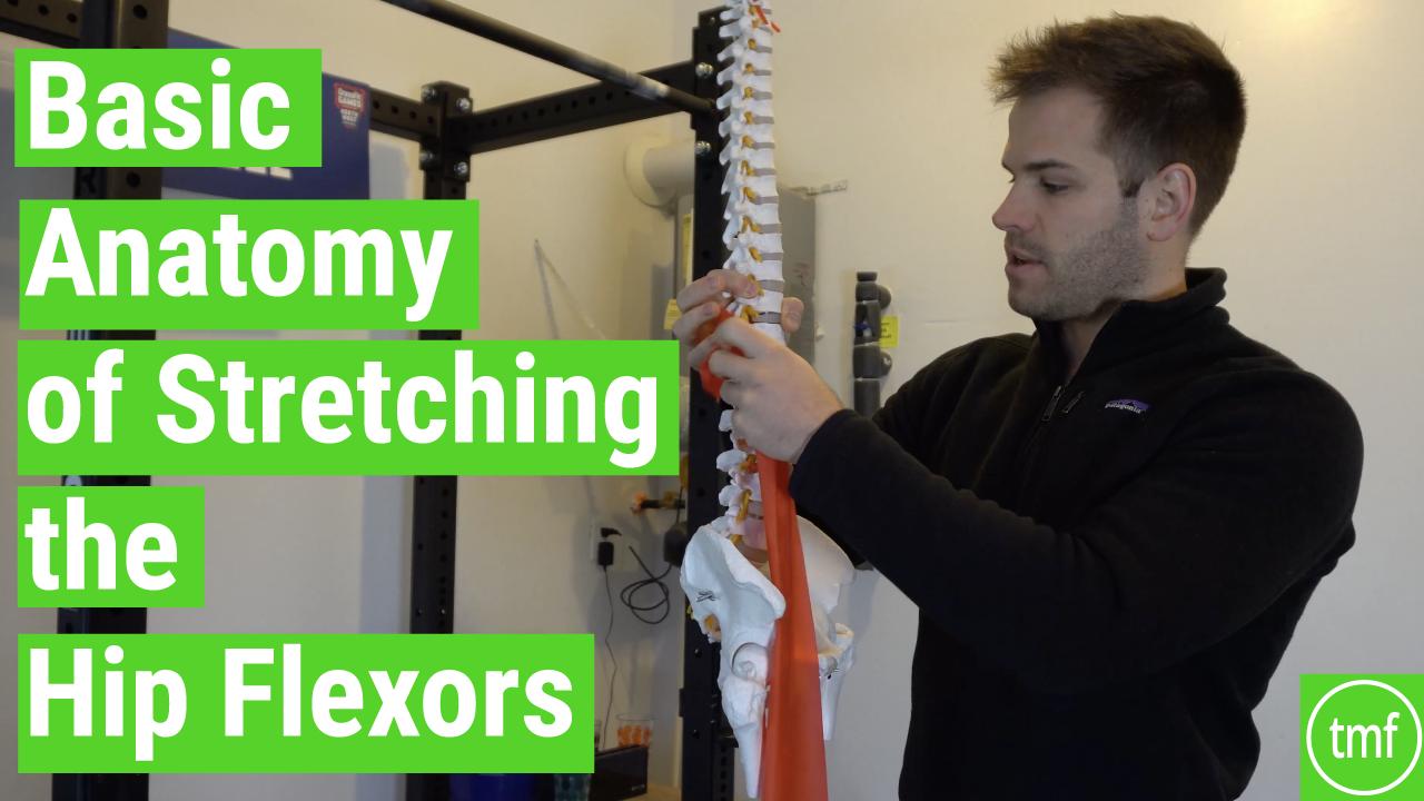 Basic Anatomy of Stretching the Hip Flexors - Movement Fix